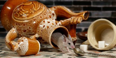 3 Ways to Keep Mice Out of Your Kitchen, Mount Vernon, Illinois