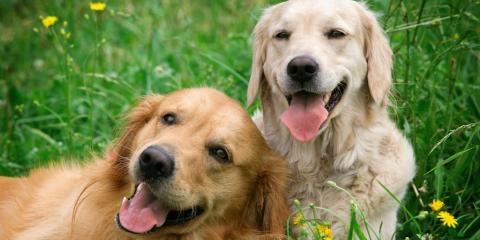 Does My Dog Have a Food or Seasonal Allergy?, Mount Washington, Kentucky