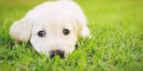 Puppy Shots & Vaccines Your Dog Needs During the First Year, Mount Washington, Kentucky