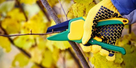 Mukwonago Tree Removal Company Explains When to Prune Your Tree, Mukwonago, Wisconsin