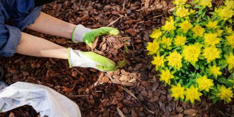 3 Reasons to Apply Mulch in the Fall, Sagamore Hills, Ohio