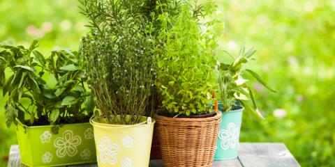 how to start an herb garden in springtime ludlow kentucky - How To Start An Herb Garden