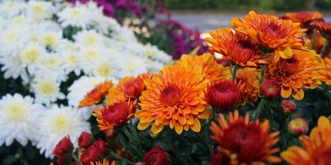 Take Home Gorgeous Fall Flowers & Festive Pumpkins at Lakeview Garden Center & Landscaping , Fairfield, Ohio