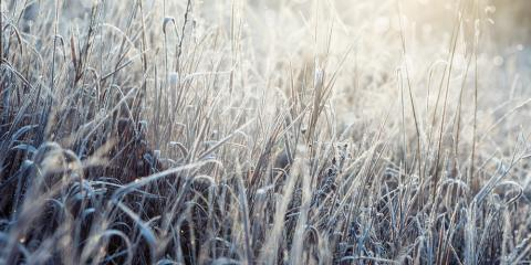 A Landscaping Contractor Explains What You Should Know About Winterizing Your Lawn, Eldersburg, Maryland