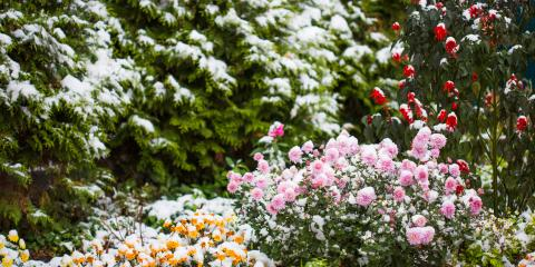 3 Flowers to Beautify Your Winter Garden, Eldersburg, Maryland