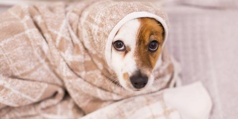 3 Tips to Calm Your Pup if They Hate Baths, Conway East, South Carolina