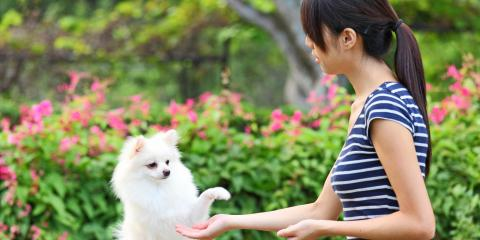 3 Essential Training Tips for a Puppy, Conway East, South Carolina