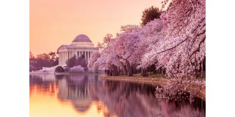National Cherry Blossom Festival 2018 – Save On Parking! , Alexandria, Virginia
