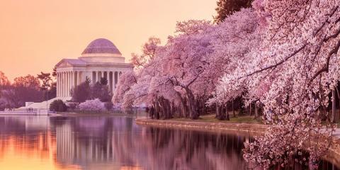 2018 National Cherry Blossom Festival – Save On Parking!, Arlington, Virginia