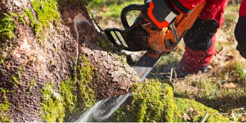 5 Signs You Need Tree Removal Service, Millersport, Ohio