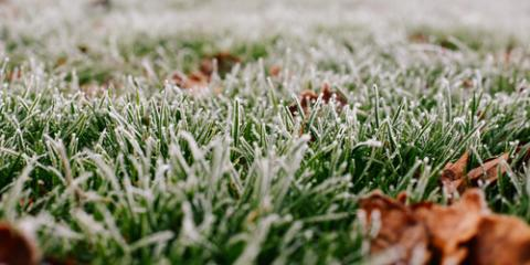 Top Lawn Care Advice for Healthy Winter Grass, Cincinnati, Ohio