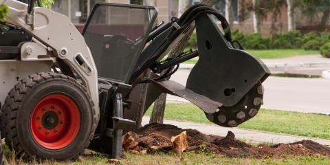 3 Reasons Why You Shouldn't Leave a Tree Stump in the Ground, Summerfield, North Carolina