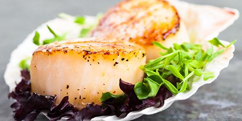 5 Interesting Facts About Scallops, Thomasville, North Carolina