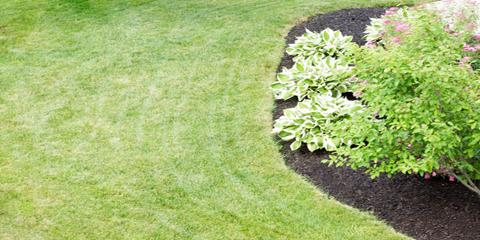 5 Maintenance Tips to Renovate Your Lawn This Year, Saltillo, Nebraska