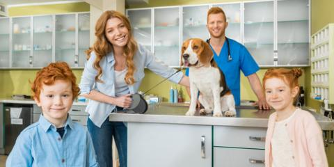 5 Things to Expect During Your Dog's First Veterinarian Visit , Lincoln, Nebraska