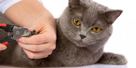 3 Tips for Trimming Your Cat's Nails, Lincoln, Nebraska