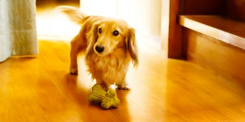 3 Ways to Protect Hardwood Floors From Pets, Lincoln, Nebraska