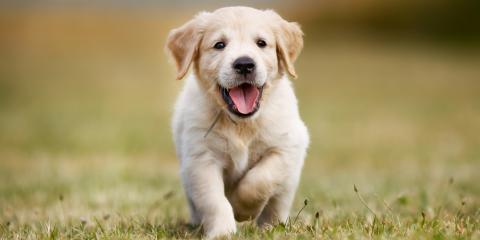 The Do's & Don'ts of Socializing a Puppy, Lincoln, Nebraska