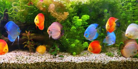 5 Tips for Moving Your Delicate Fish Tank, Lincoln, Nebraska