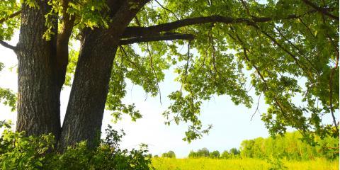 Camden Foresters Explain Timber Dating, Camden, Arkansas