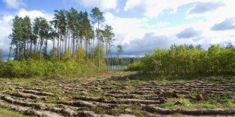 3 Factors That Make a Healthy, Happy Forest, Camden, Arkansas