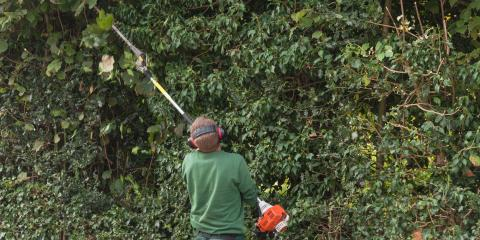 3 Pieces of Equipment Tree Service Experts Use the Most, North Huntingdon, Pennsylvania