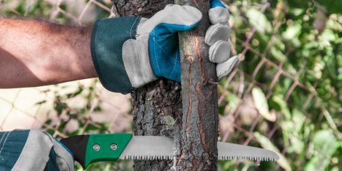 3 Reasons for Pruning Your Tree , North Huntingdon, Pennsylvania