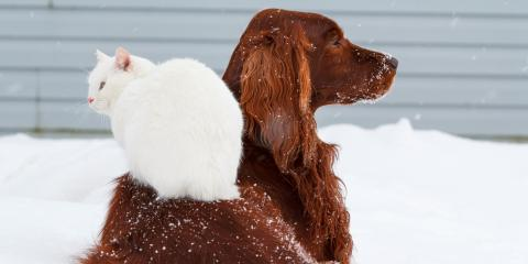How to Keep Your Pet Safe This Winter , Jefferson, Ohio