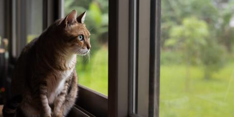 Should You Use a Cat for Pest Control?, New Braunfels, Texas
