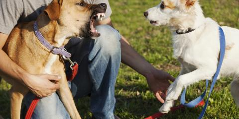 3 Steps to Take if You're Attacked by a Dog, ,