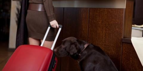 What Makes a Pet-Friendly Hotel?, New Columbia, Pennsylvania
