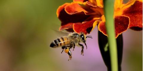 3 Steps Toward Effective Bee Control , North Hempstead, New York
