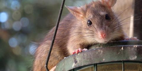 How Pest Control Keeps You & Your Family Healthy, North Hempstead, New York