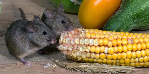 5 Signs You May Need a Rodent Control Service, North Hempstead, New York