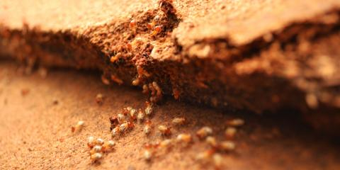 4 Signs You May Have Termites, North Hempstead, New York