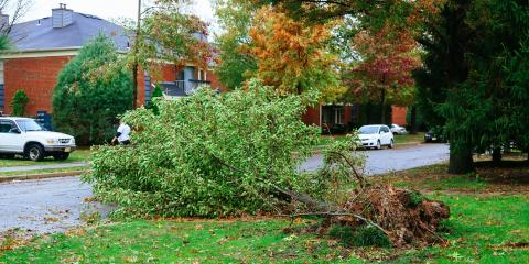 How to Clean Your Yard After a Severe Storm, Harris, North Carolina