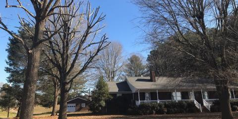 What's the Difference Between Tree Pruning & Trimming?, New London, North Carolina