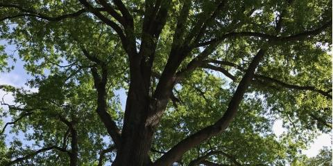 H & H Tree Service's 5 Tips for Maintaining Healthy Trees, New London, North Carolina