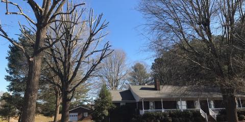 3 Ways Hiring a Tree Service Can Increase Curb Appeal, New London, North Carolina