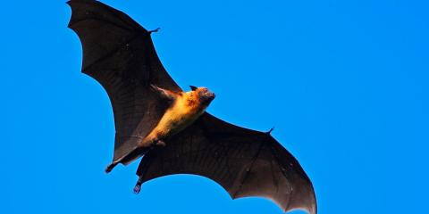 5 Fascinating Facts About Bats, New Milford, Connecticut
