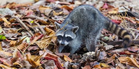 3 Winter Pests Homeowners Should Watch For, New Milford, Connecticut