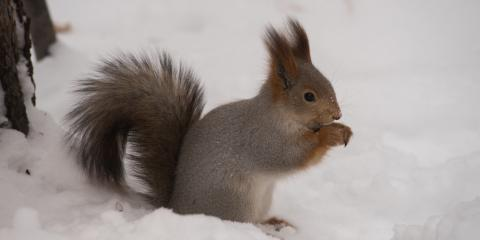 5 Winter Wildlife Control Tips for Preventing Animals From Hibernating in Your Home, New Milford, Connecticut