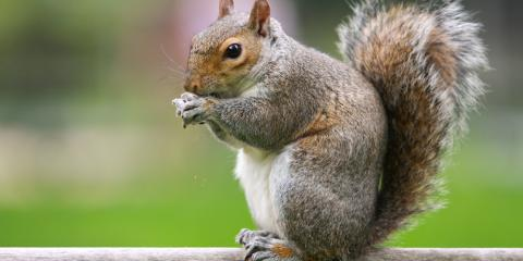 4 Plants That Effectively Deter Wildlife, New Milford, Connecticut