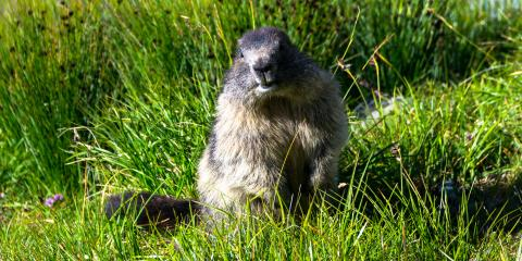 3 Strategies for Keeping Woodchucks Away, New Milford, Connecticut