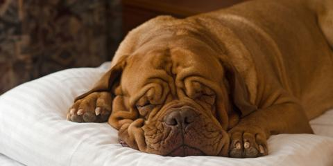 4 Tips to Care for Pets Post-Surgery, Churchville, New York