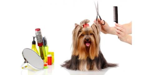 "Top Dog Groomer Says Your Pup Doesn't Need ""The Works"" Every Time , Oyster Bay, New York"