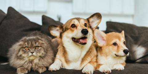 5 Ways Smart Home Security Benefits Pet Owners, Delhi, New York