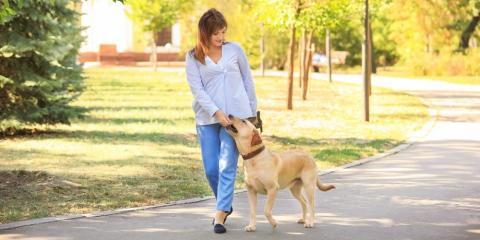 How to Keep Your Dog Active When Living in an Apartment, Manhattan, New York