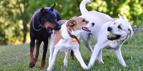 3 Reasons to Choose Cage-Free Dog Boarding, Manhattan, New York