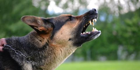 New York Injury Lawyer Explains What to Do If You're the Victim of a Dog Bite, Manhattan, New York